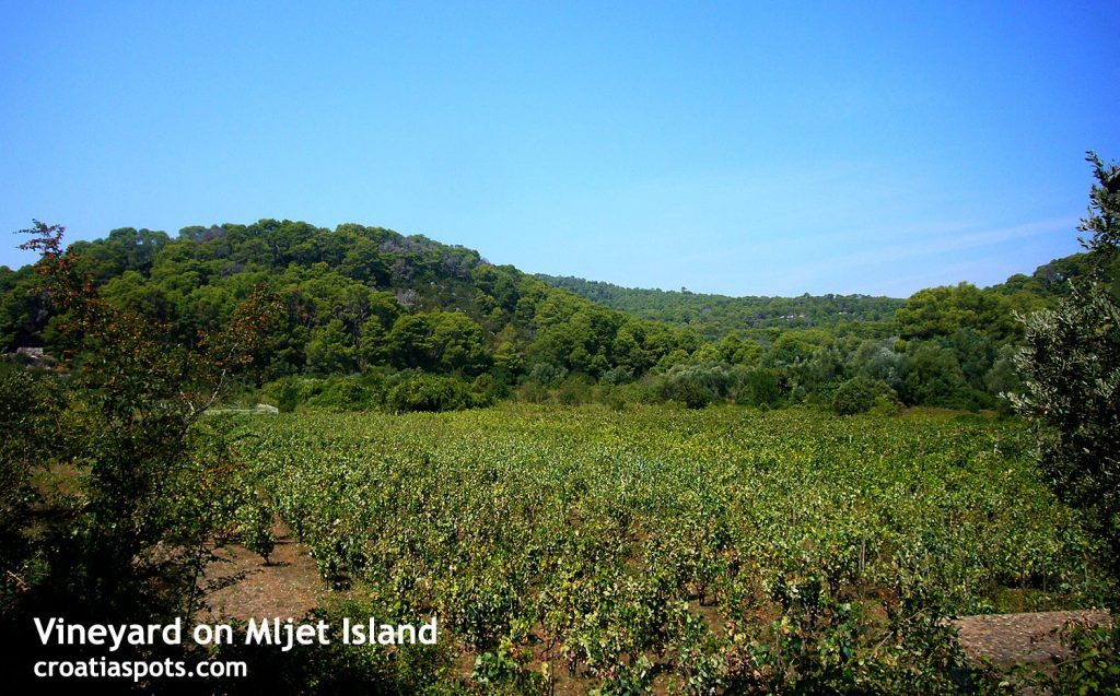 Numerous hiking trails lead through the vineyards on Mljet island